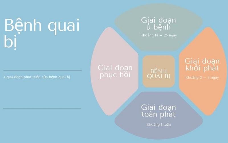4 giai đoạn phát triển của bệnh quai bị