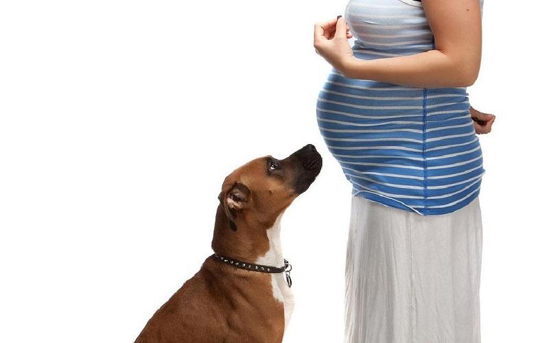 nuôi chó có ảnh hưởng đến thai nhi không